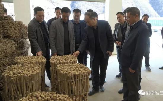 省农牧厅副厅长杨祁峰深入宕昌县督导调研产业扶贫等工作